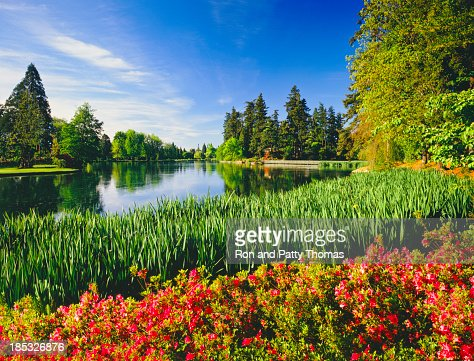 Spring In Portland Oregon Stock Photo Getty Images