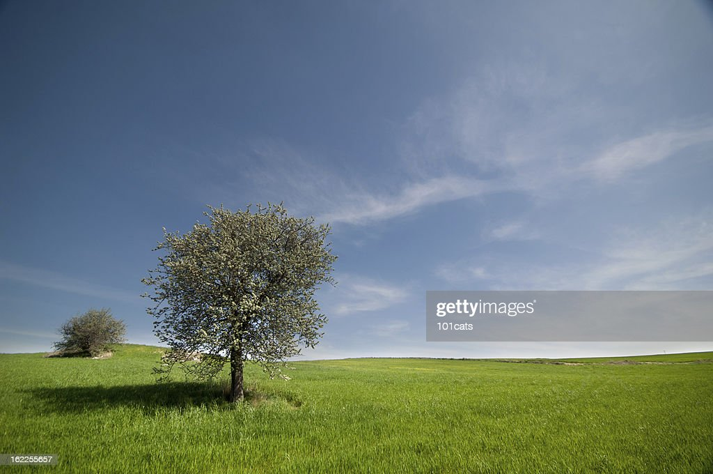 spring is coming : Stock Photo