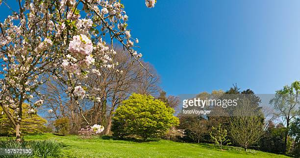 Spring Is Here vibrant green foliage delicate pink blossom flowers