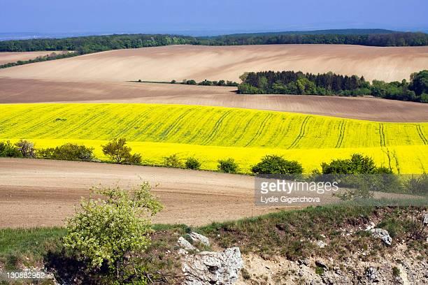 Spring landscape in Tabulová, Růžový vrch a Kočičí kámen national sanctuary, Pálava protected landscape area, Břeclav district, South Moravia region, Czech Republic, Europe