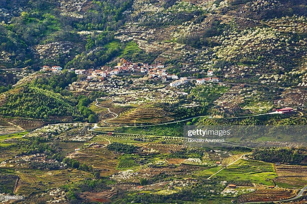 Spring landscape in the Jerte Valley. : Stock Photo