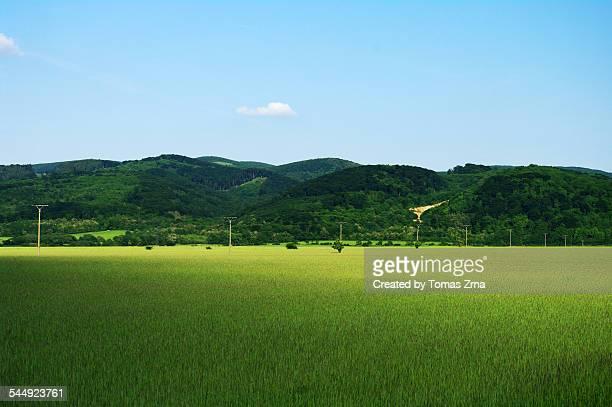 Spring landscape in Zahorie