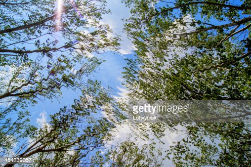 spring landscape of trees against the sky : Stock Photo