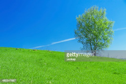 spring landscape with a lonely tree in the field : Stock Photo
