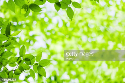Spring Leaves : Stock Photo