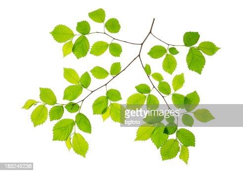 Spring Leaves-XXXL