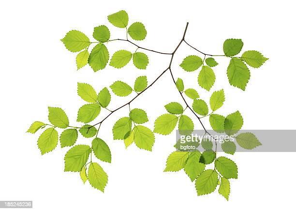 Frühling Blätter-XXXL
