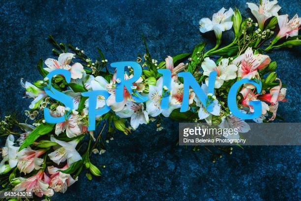 Spring lettering with white flowers and petals