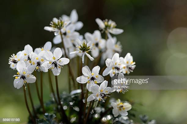 Spring little flower