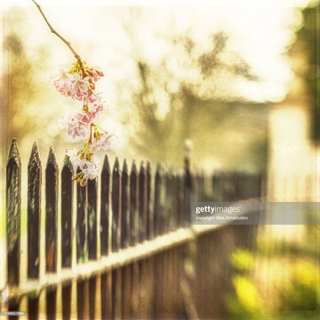 Spring on fence : Stock Photo