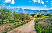 Beautiful spring day with idyllic island scenery on Mallorca, Spain