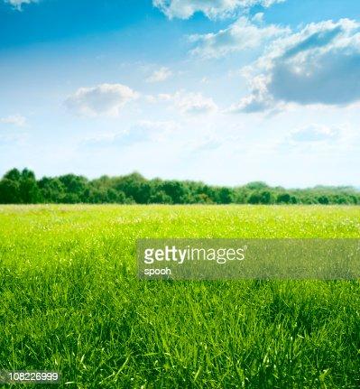 Printemps sur prairie