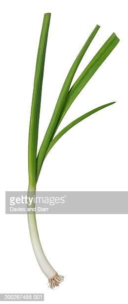Spring onion (or scallion)