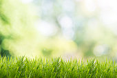 Spring or summer with grass field and nature green background