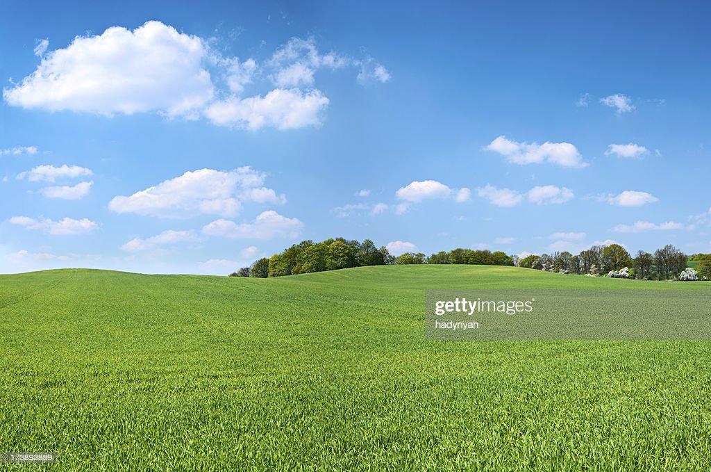 Spring panorama 46MPix XXXXL - meadow, blue sky, clouds : Stock Photo