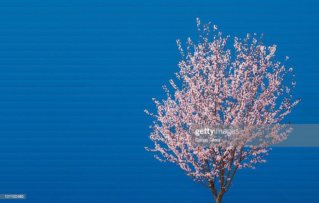 Spring : Stock Photo