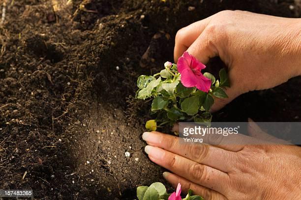Printemps Plantation dans le jardin Hz