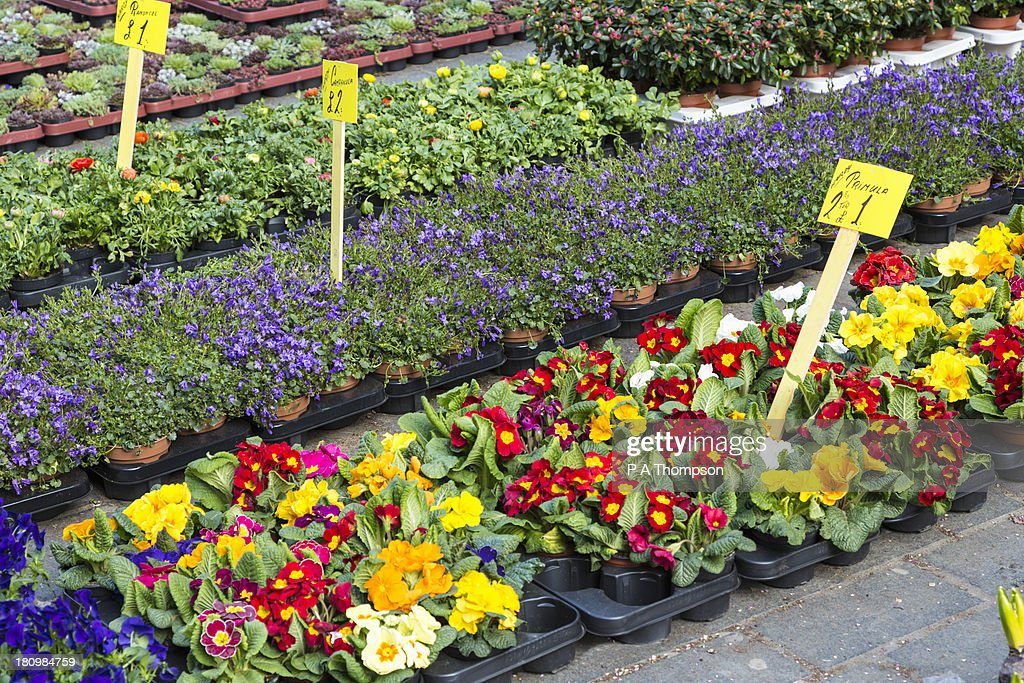 Spring plants and flowers for sale : Stock Photo