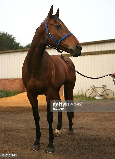 Spring Racing Carnival 2006 Melbourne Cup runner On A Jeune at his stables at Ballarat 5 November 2006 THE AGE Picture by PAT SCALA
