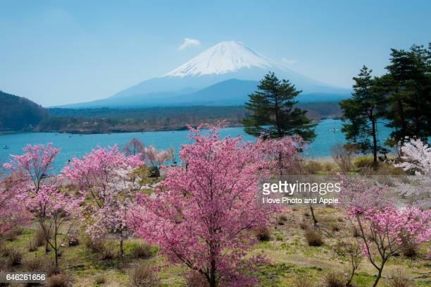 Spring scenery at Lake Shoji