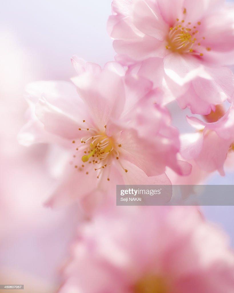 Spring shine