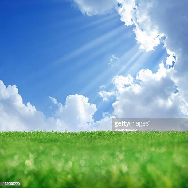 Printemps soleil et d'un paysage verdoyant