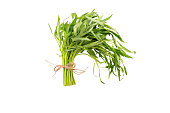 Spring tarragon isolated on white background