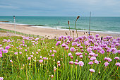 Spring Clover Meadow on Cliff at the seaside in Bournemouth with a blue sky and turquise water