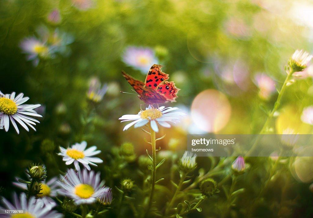 Spring time in garden