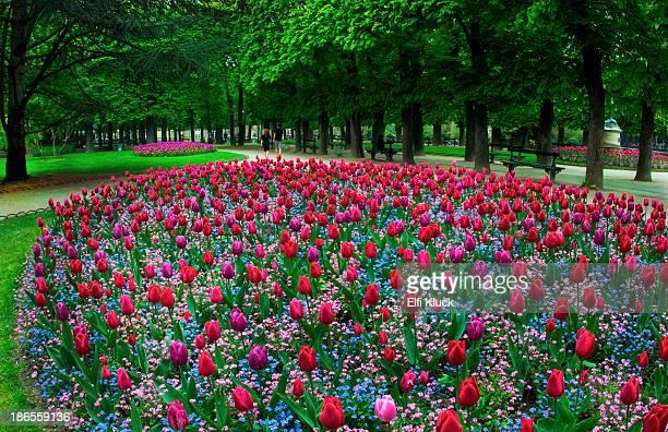 Spring time in Paris Garden