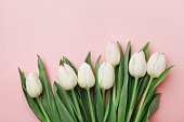 Spring tulip flowers on pink background top view in flat lay style. Greeting for Womens or Mothers Day.