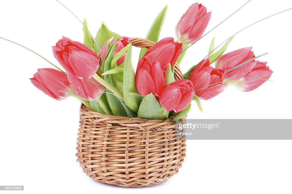 Spring Tulips : Stock Photo