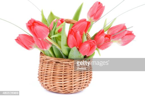 Spring Tulips : Stockfoto