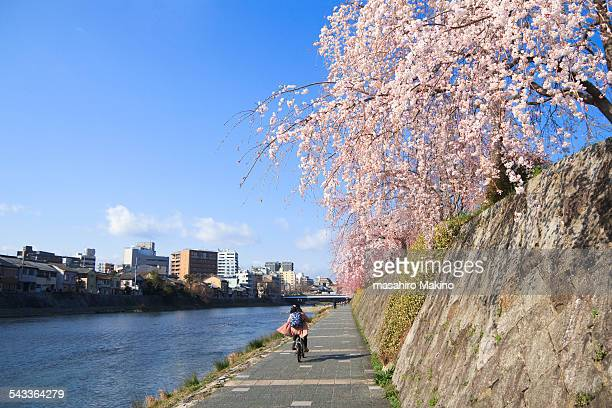 Spring view of Kamo River, Kyoto city