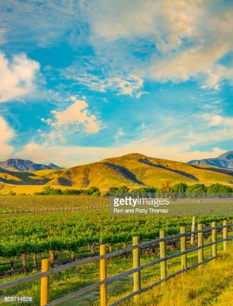 Spring vineyard in the Santa Ynez Valley Santa Barbara, CA(P)