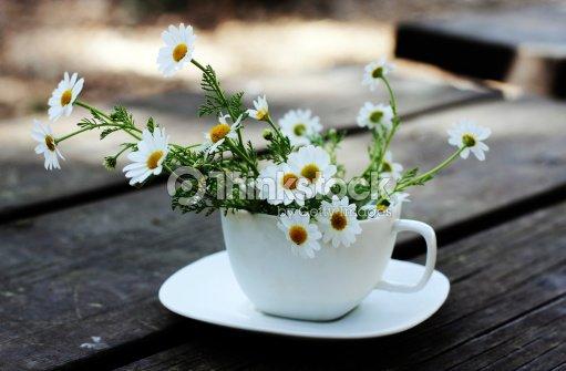 Spring white daisies : Stock Photo