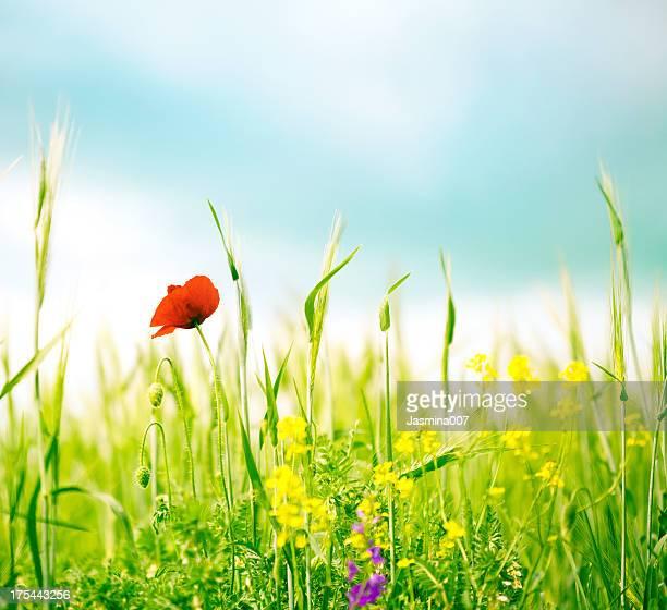 Im Frühling Wildblumen
