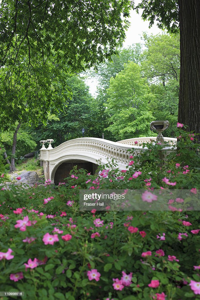 Springtime, Central Park : Stock Photo