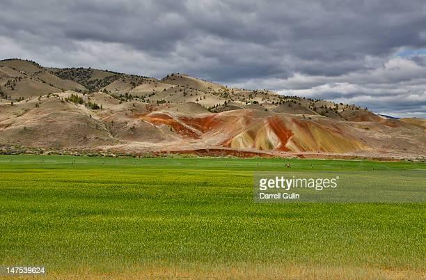 Springtime grass  near Painted Hills