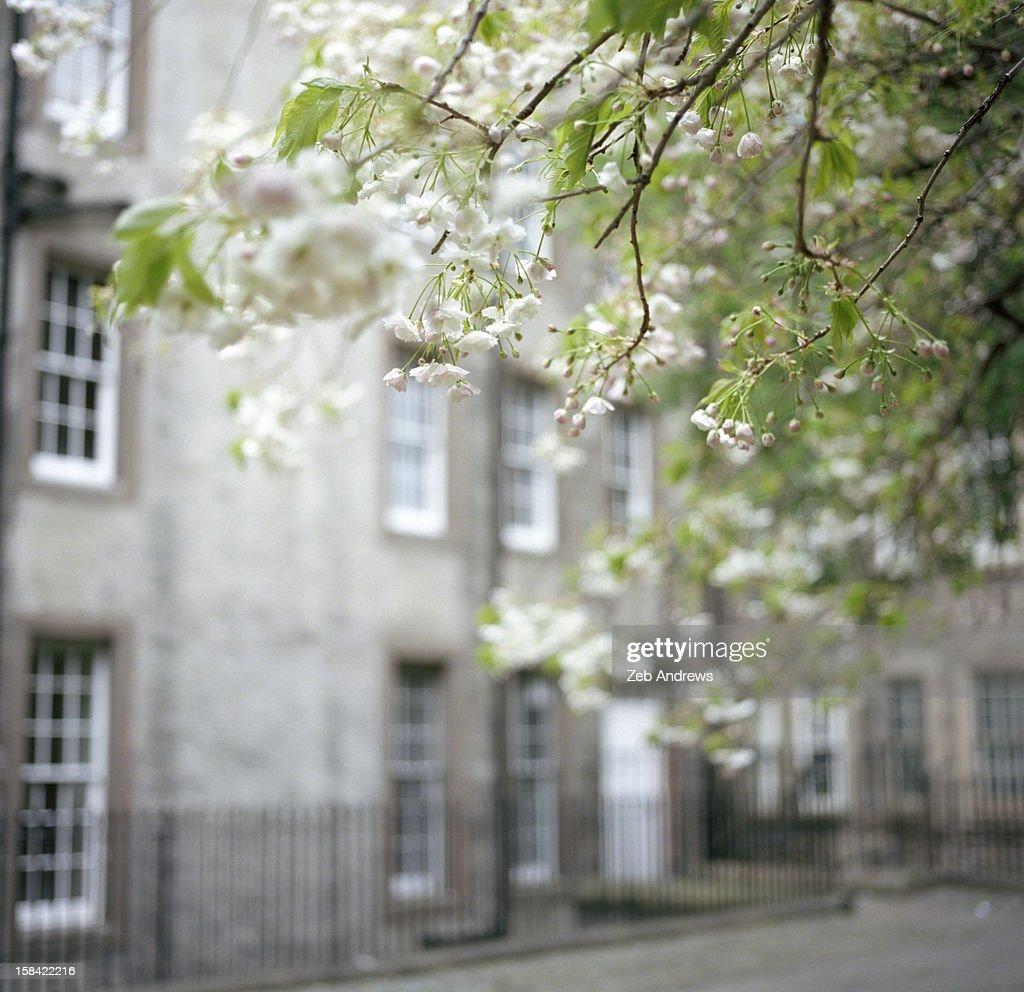 Springtime in Edinburgh : Stock Photo