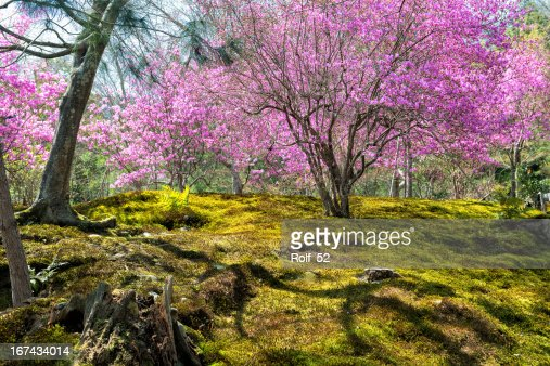 Springtime in Japan : Stock Photo