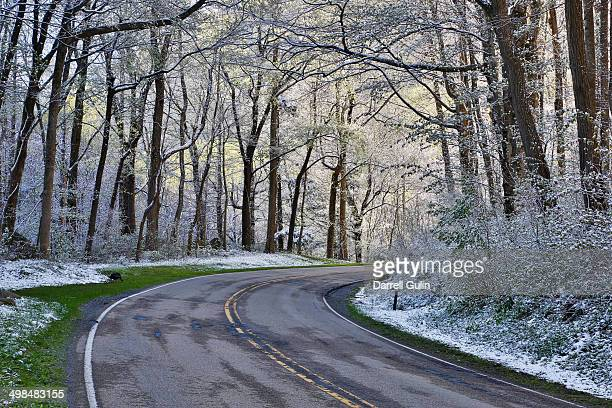 Springtime snow hardwoods and highway