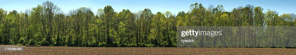 Springtime Treeline Panorama