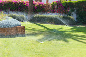 Sprinkler in garden watering the lawn. Automatic watering lawns.
