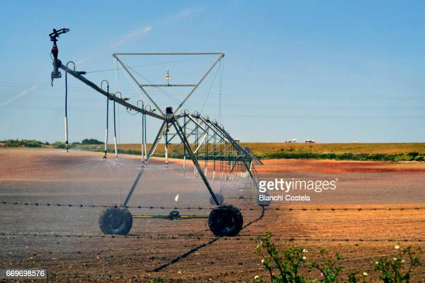 Sprinkler irrigation in the field in spring