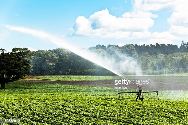 Sprinkler watering crops on a farm