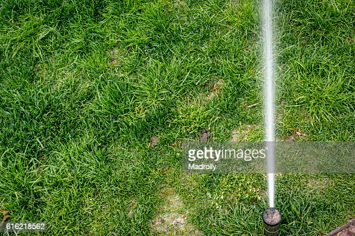 Sprinkler watering : Stock Photo