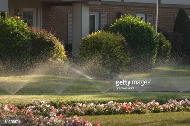 Sprinkler & Blumen
