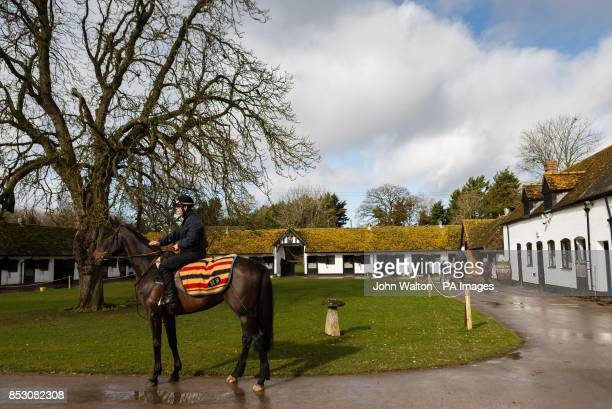 Sprinter Sacre in trainer Nicky Henderson's yard during a stable visit at Seven Barrows Lambourn
