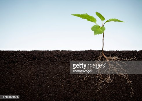 Sprout and Roots - Earth Environment Green Plant Tree Nature